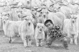 PhotoVivo Merit Award - Hiu Wan Yeung (Hong Kong)<br />The Little Shepherd