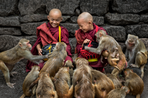 PhotoVivo Merit Award - Kwok Hoong Vincent Eu (Singapore)<br />Feeding The Monkeys