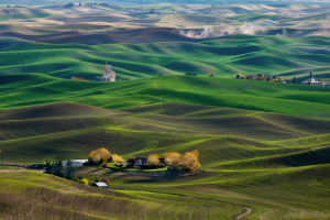 PSA HM Ribbons - Philip C Y Chan (Canada)Wheatland In Palouse Wa