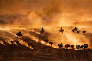 PhotoVivo Merit Award - Tracy Shuxi Feng (USA)<br />Horse Racing At The Frontier