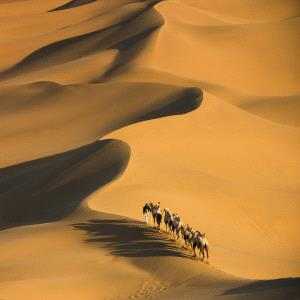PIPA Merit Award - Zhenghua Peng (China)  Desert Walk