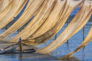 PIPA Merit Award - Lezhi Yin (China)  Hanging Net