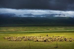 PIPA Gold Medal - Jing Gu (China)  Sheepherder At Prairie