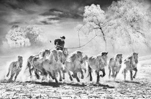 PIPA Gold Medal - Arnaldo Paulo Che (Hong Kong) <br /> Horse Looping 3
