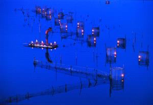 PhotoVivo Honor Mention - Tong Hu (China) <br /> CATCHING AT NIGHT
