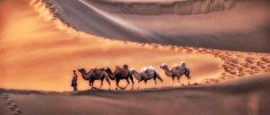 PIPA Gold Medal - Lee Eng Tan (Singapore)  Camels Stroll In Desert