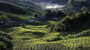 PSA HM Ribbons - Tan Tong Toon (Malaysia)  Green_Valley