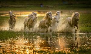 PhotoVivo Honor Mention - 张明友 Mingyou (China) <br /> Greet The Sunrise