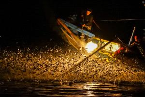 ICPE Gold Medal - Lilo Chen (Taiwan)  Bonfire Fishing-B