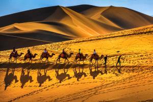 PhotoVivo Gold Medal - Tianshou Lai (China)  Camel Team
