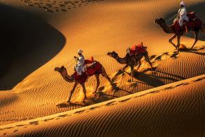 PIPA Merit Award e-certificate - Binyuan Li (China)  Desert Camels12