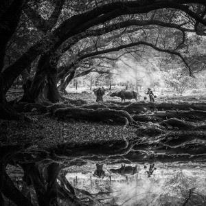 PhotoVivo Gold Medal - Beimeng Liu (China) <br /> Morning Work