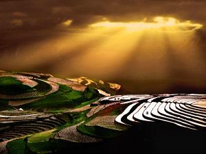 PIPA Merit Award e-certificate - Tong Hu (China) <br /> Gold Sprinked Wart