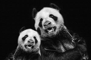 PIPA Merit Award e-certificate - Myo Win (Singapore)  Pandas