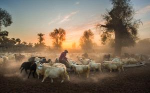 PhotoVivo Gold Medal - Jianhui Liao (China) <br /> Sunset Pastoral