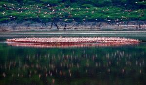 APU Honor Mention e-certificate - Weidong Zhong (China) <br /> Flamingo Tribe