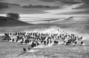 PhotoVivo Honor Mention e-certificate - Wei Wang (China) <br /> Ten Thousand Steeds Gallop