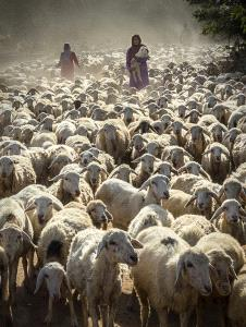 PhotoVivo Honor Mention e-certificate - Huu Hung Truong (Vietnam)  3- The Shepherd Girl