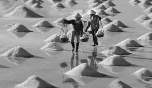 ICPE Honor Mention e-certificate - Sa Kim Tran (USA)  On The Salt Marsh